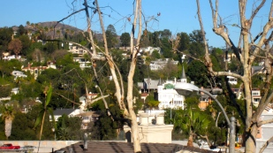 From the Top of My roof