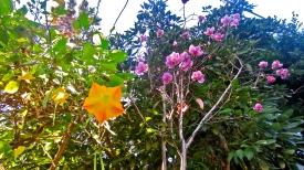 Magical flower land