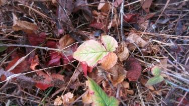 Poison oak!